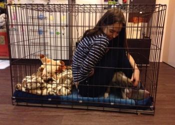 Клетки для собак в Тюмени