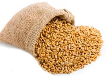 Продам Пшеница 5кл,1500 т