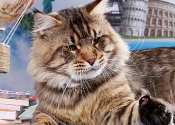Шикарные котята мейн кун .