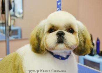 Груминг (стрижка, тримминг) собак и кошек в г.Пушкино