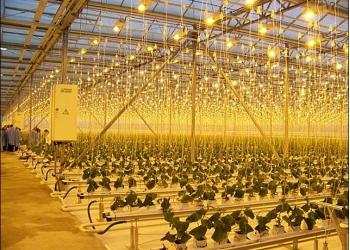 Лампы для растений ДНаЗ, тепличные светильники и др.
