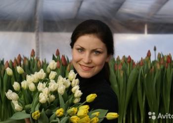 Тюльпаны оптом к 8 марта 2017