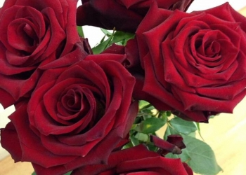 Розы оптом на 8 марта 2017