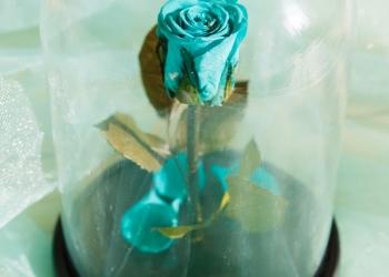 Роза Notta&Belle в стеклянной колбе - удивительный подарок по любому случаю