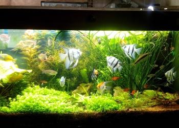 Чистка обслуживание аквариума