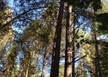 Продам лесной участок
