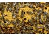 Продаются пчелосемьи разной силы; рамка Рута