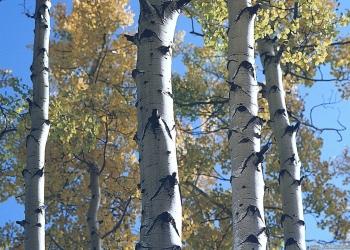 Обрезка плодовых деревьев, расчистка и благоустройство участков, покос травы