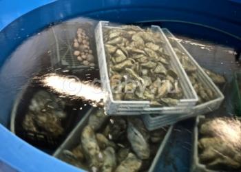 Бизнес по продаже живых и замороженных морепродуктов