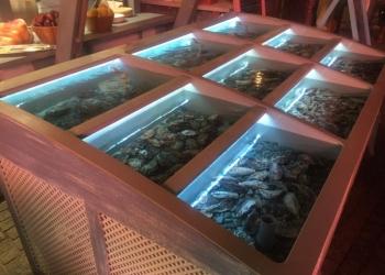 Аквариум для живых морепродуктов