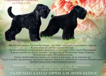 Щенки Русского Чёрного Терьера п-к Денеб-Кейтос