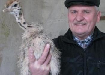 Африканские страусы из Белоруссии г. Мозырь: цыплята, птенцы, взрослые 6 лет