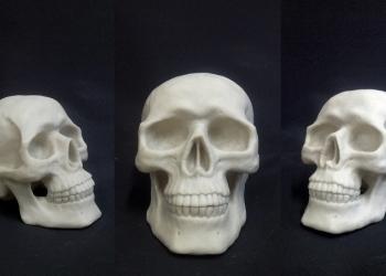 Муляжи черепов