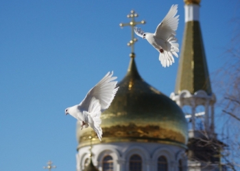 Белые голуби на праздники.