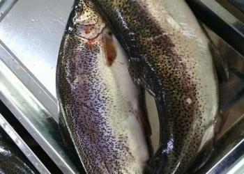 Рыба Форель оптом