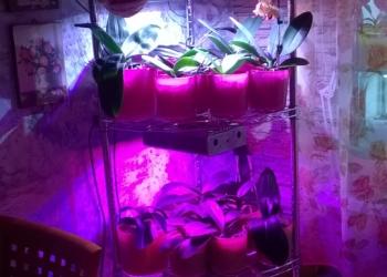 LED фитосветильники в наличии и под заказ для домашних растений и рассады.
