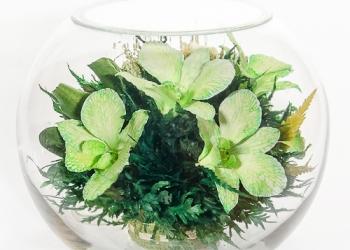 Цветы в стекле, орхидеи зелёных и белых оттенков