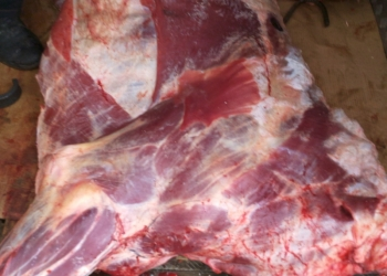 Реализуем мясо говядины