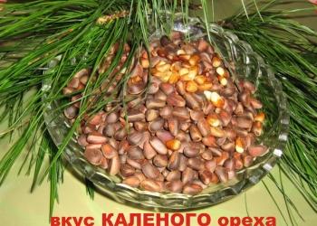 Кедровое масло с вкусом КАЛЁНОГО ореха.