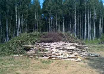 Продаю берёзу тонкомер от 2-х до 4 метров, дрова