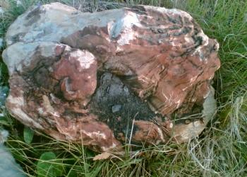 окаменелое дерево для ландшафта.