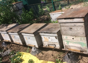 пчелы в Волгограде
