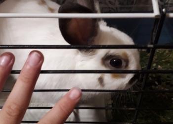 Дек. Кролик+клетка
