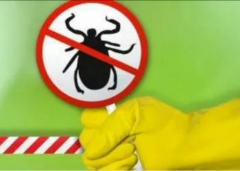 Уничтожение насекомых Омск