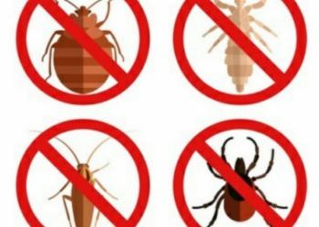 Уничтожение всех видов насекомых.Дезинсекции
