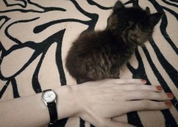 Ласковый котёнок