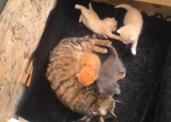 Ласковые котята нуждаются в ответственных хозяевах