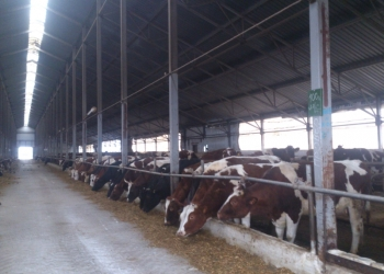 Готовый бизнес для производства молока