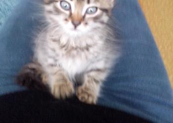 Отдам котенка в хорошие руки!