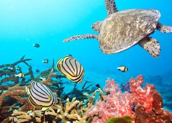 Постоянное, абонентское обслуживание пресноводного аквариума