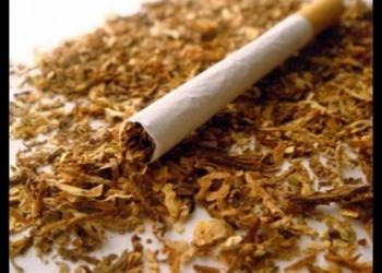 Листовой нарезанный табак Берли, Вирджиния, Ориенталь(Сербия, Испания, Кипр)