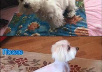 стрижка, груминг-уход собак на дому и с выездом
