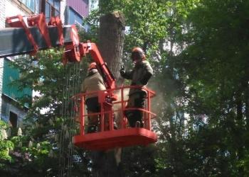 Спилить дерево, обрезать ветки. Дробление пней.Вывоз порубочных остатков.