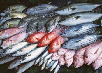 Свежемороженая рыба, рыбные полуфабрикаты