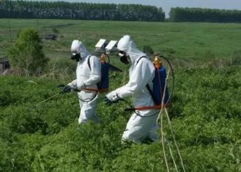 Обработка гербицидами от сорняков. Уничтожение сорняков на разных типах участков