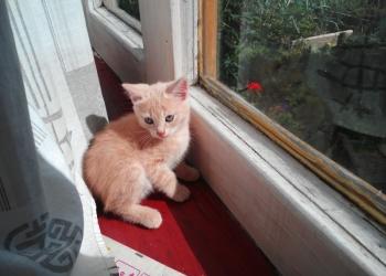 Домашний симпатичный котик.