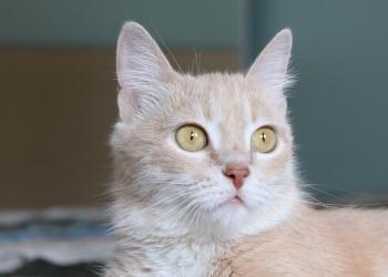 Кошечка Перри- само совершенство