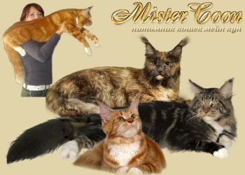 Продаются котята мейн кун котики. Настоящие рысята