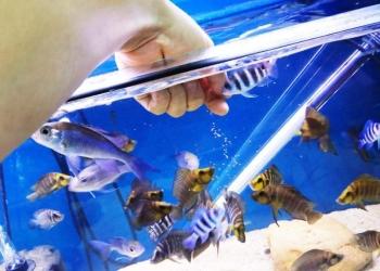 Продам рыбок разных красивых для дома для души!