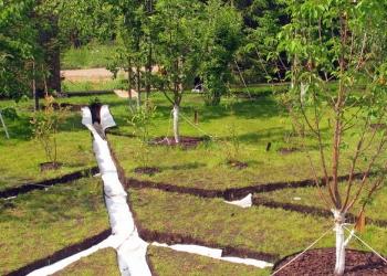 Дренажная система для садового участка
