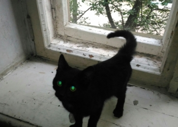 Чёрный котик, ждёт тебя хозяин!