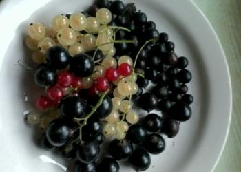 Плодовые,ягодные и декоративные растения