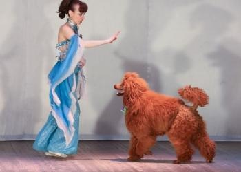 Жизнерадостные праздничные программы в Год успешной Жёлтой Собаки!