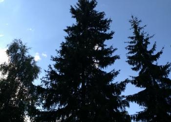 Удаление деревьев (обрезка валка спил)