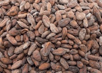 Поставляем зеленый кофе, какао бобы, орехи и сухофрукты оптом по России и СНГ