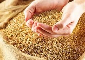 Натуральные корма оптом и в розницу